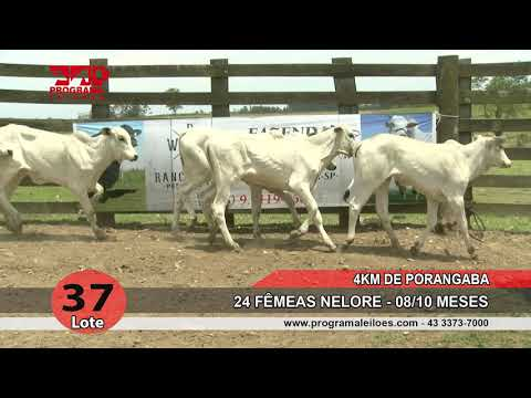 Lote 37