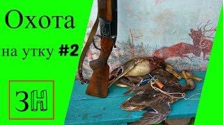 Охота на утку в 2016 #2.Осенняя охота.