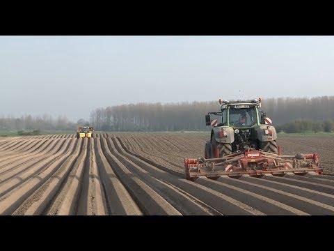 Как выращивают картофель в Европе
