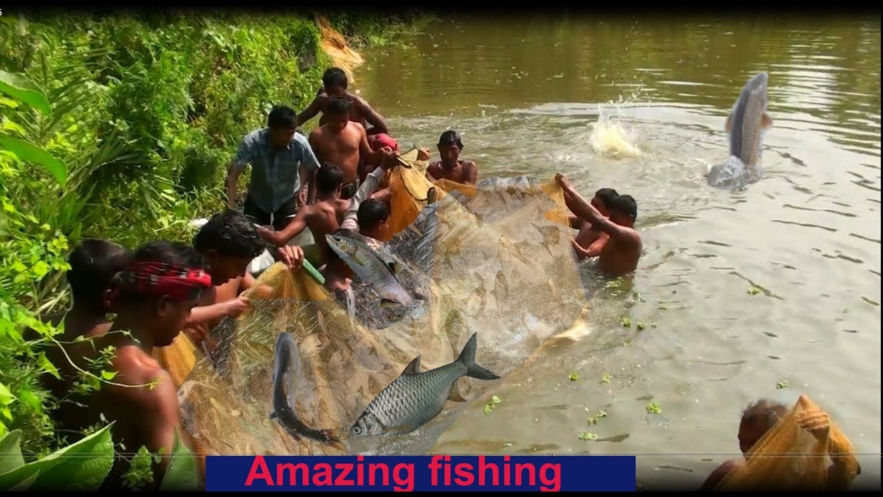 Million Of Big Fishes Jumping Out of Water | Amazing Fish Catching Video using a Fishing Net