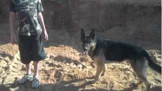 German Shepherd Has Amazing Vertical Jump