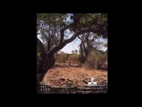 Norman Carr Safaris - ZAMBIA - Two leopard, a hyena, one kill