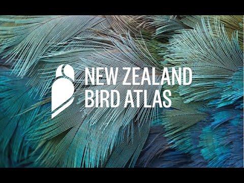 NZ Bird Atlas Launch Video (Full Length)