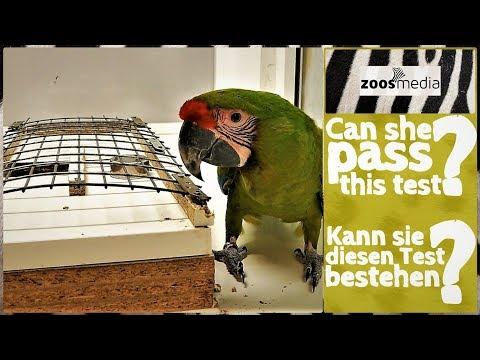 Papageien-Forschung im LORO PARQUE: Hinter den Kulissen vom Max-Planck-Institut   zoos.media