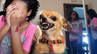 OUR DOG ATTACKED ME PRANK ON MOM