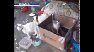 В Мариуполе кто-то зверски убивает котят