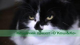 """Приют для кошек """"Окошко"""" (г. Минск)"""