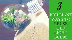 3 Brilliant ways to reuse old light bulbs _ Life Hacks