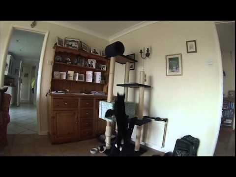 Cat jumping - slowmotion (gopro)