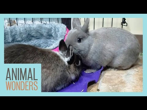 Rabbits Meet! | Will They Be Friends?