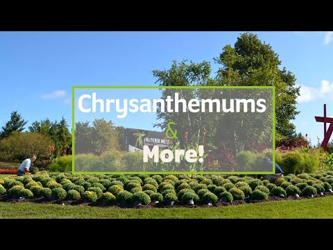 Frederik Meijer Gardens & Sculpture Park Presents: Chrysanthemums & More!