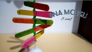 DNA Modeli Yapımı