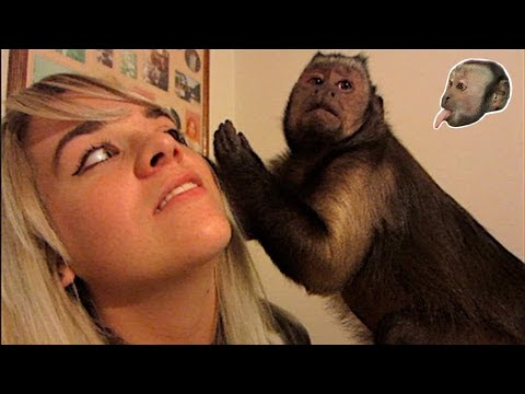Capuchin Monkey, Pit Bulls and Family Visit!