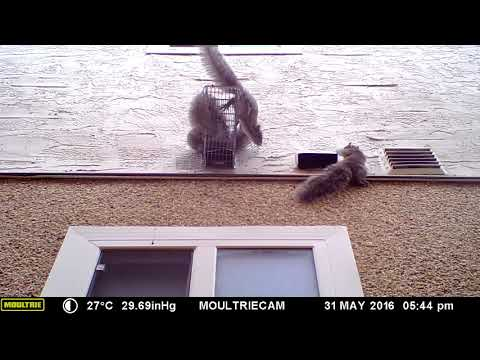 Four Squirrels and a One Way Door