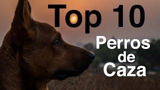 Los 10 Mejores Perros de Caza