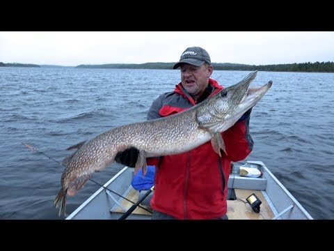 GIANT Canadian Pike!!!