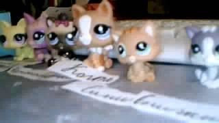 коты-воители(предводительный)
