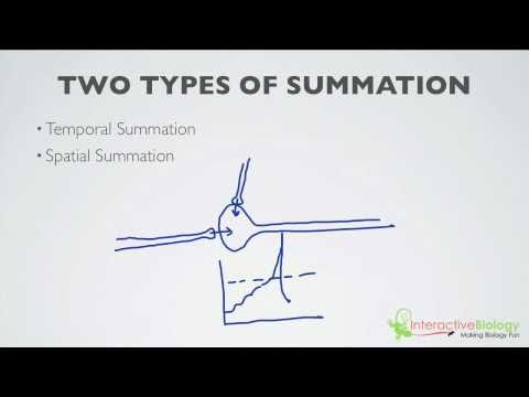 019 What is Summation (2 Types)