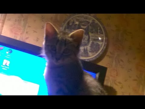 Isis our cat, Vine videos and some pixs