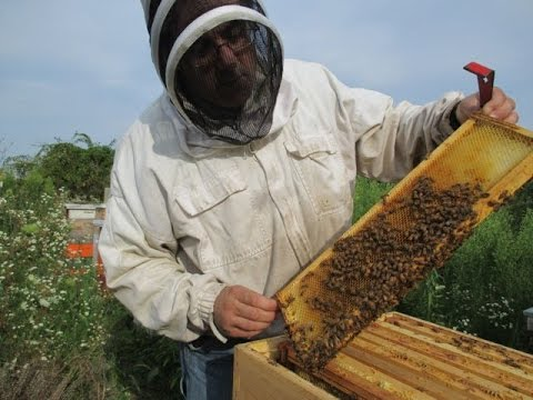 Beekeeping in America: Monroe County Historical Association