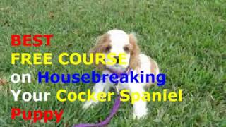 ♥♥♥How to Potty Train a Cocker Spaniel Puppy ► Best FREE Course on Puppy Potty Training