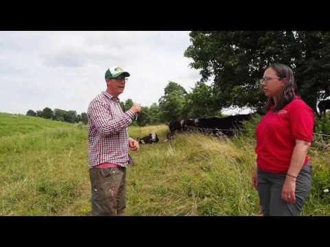Beginning Beef Farming