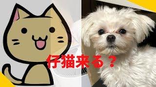 秋田犬、柴犬、マルチーズの「ぼん・スー・ちゅー」明日、我が家に子猫...