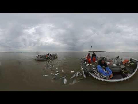 BIG TIDE! Commercial Fishing For Sockeye Salmon In Bristol Bay Alaska