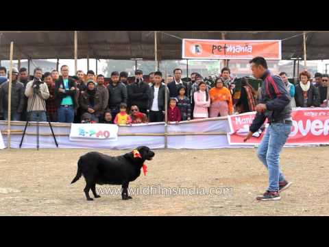 Dog show in Manipur, India