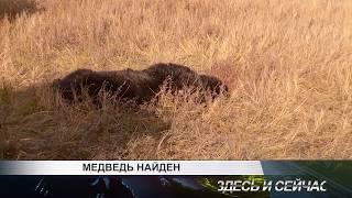 медведь найден
