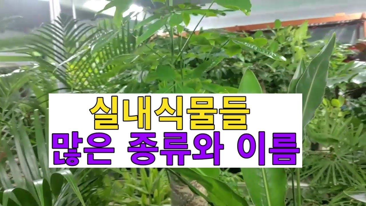 화원에 있는 많은 실내식물 종류와 이름