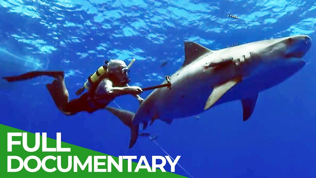 Ocean Vet Diaries: Tragic Death of Neil Burnie | Ocean Vet | S01 E11 | Free Documentary Nature