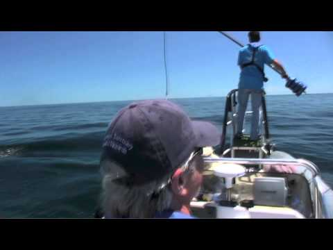Your Earth Is Blue: Humpback Whale Tagging at Stellwagen Bank