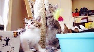 小老鼠被大胖猫抢走小猫咪气坏了,因为打不过只好躲在盆子里奶凶