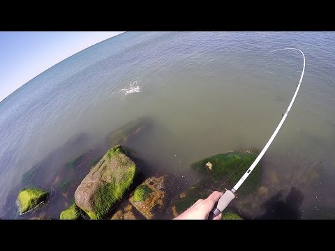 Spring Run Striper Searching Rhode Island Quick Tips And Report Video.