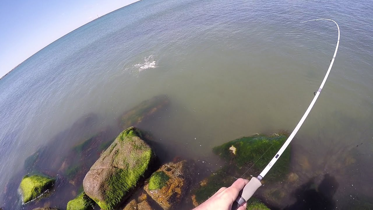 Spring run Striper Searching Rhode Island Quick Tips and Report Video
