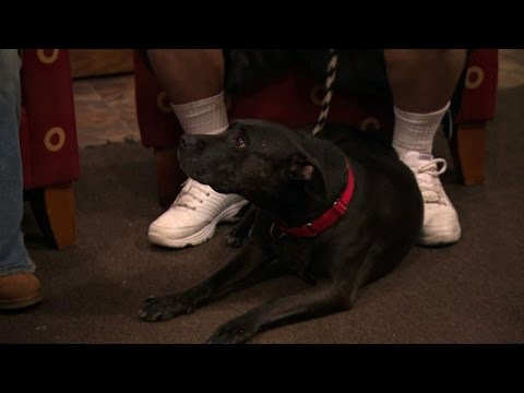 Acupuncture for Dogs Is a Thing | Pit Bulls and Parolees thumbnail