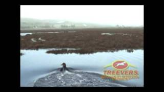 Treevers: Willow (german Shorthaired Pointer) And Lanie (weimaraner) Play Fetch, And Swim.
