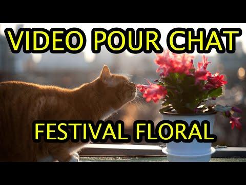 Video Pour Chat - Festival Floral - Version 15 Mn
