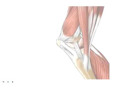 Tendons vs. Ligaments - What's the Difference? - YouTube
