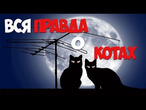 дня фото коты 3