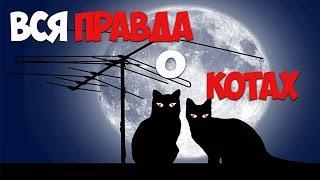 видео Кошачий ошейник с gps