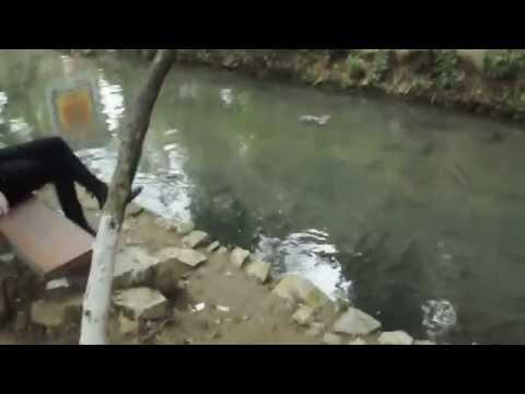 Suối cá thần Cẩm Lương Cẩm Thủy Thanh Hóa