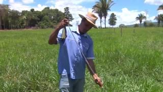 Manejo de pastagem em sistema silvipastoril - Orlando Oliveira (Embrapa Agrossilvipastoril)