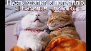 Кошачья жизнь сплошной прикол