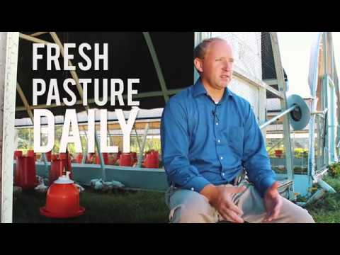 Pastured Poultry: Better Way Forward