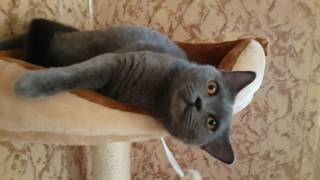 Кошка просит кота. Рussycat asked the cat.