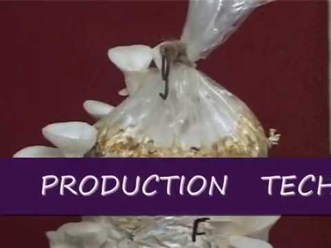 Mushroom Production Technology  -2nd- part