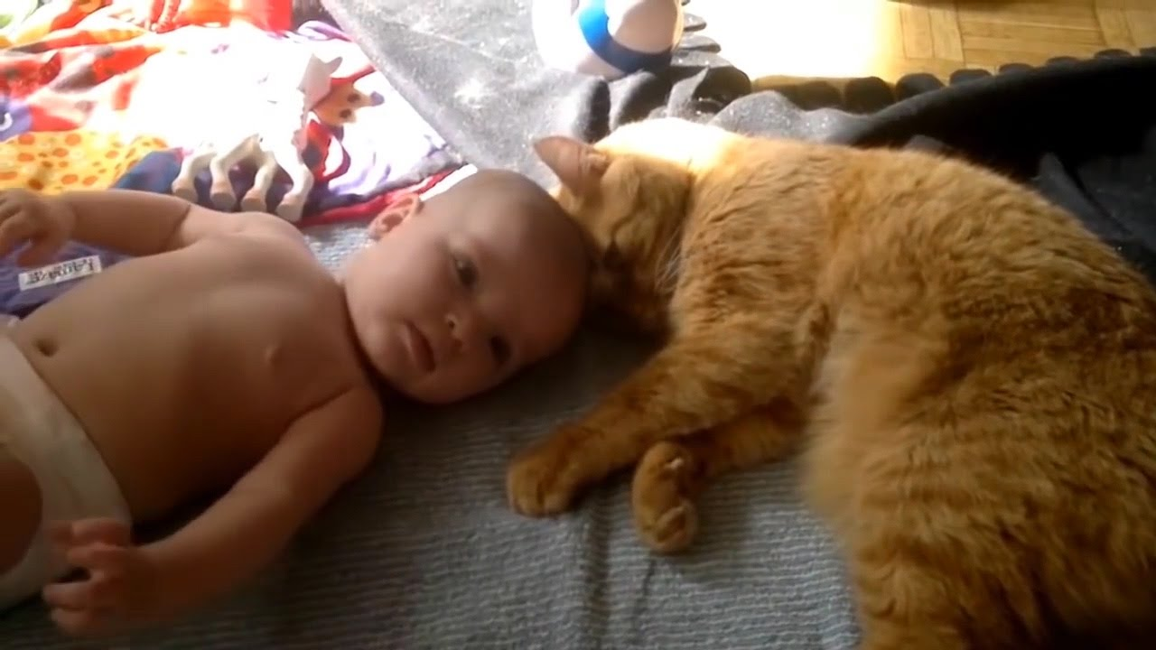cute kittens playing with babies