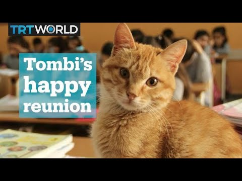 Tombi the cat reunites with his classmates